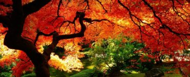fall desktop backgrounds background collection