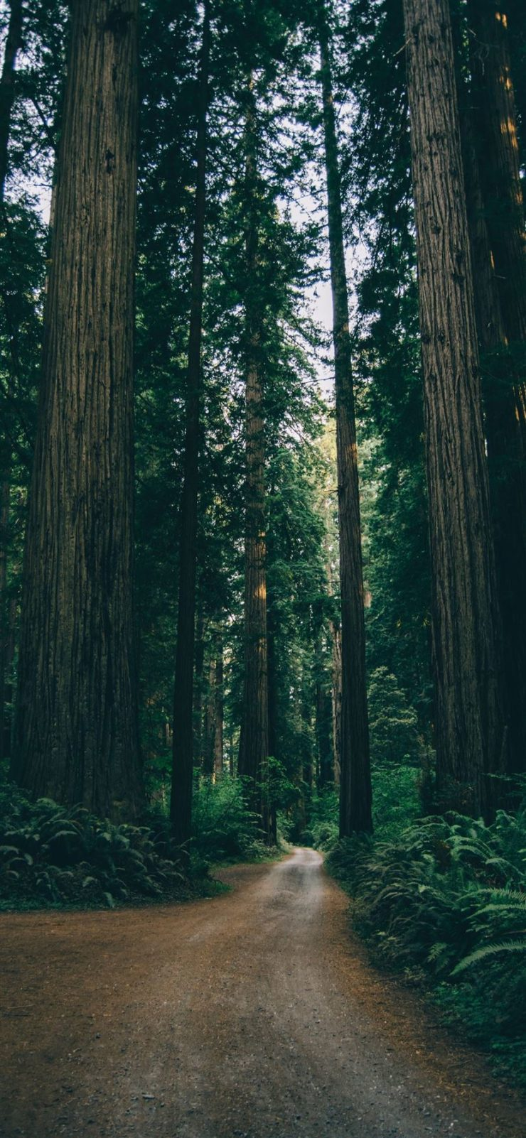 Best iphone 11 wallpaper forest to download